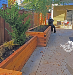 Privacy solution planters for clumping bamboo in Irvington neighborhood