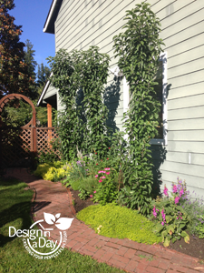 Landscape design includes dwarf apple trees 'Sentinel' take little space planted against the south wall in NE Portland.
