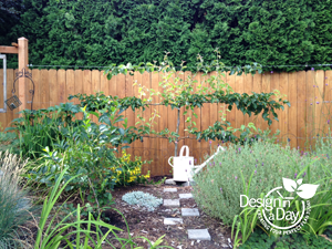 Espaliered apple tree in Milwaukie Oregon landscape design.