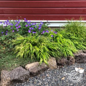 Affordable landscape plants Japanese Forest Grass & geranium in Portland home.