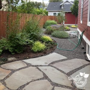 Side yard has grown from the starter plantings in this Portland home.