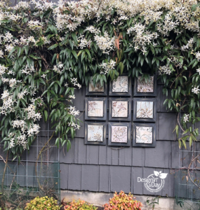 Clematis vine Armandii' softens garage wall in Grant Park neighborhood