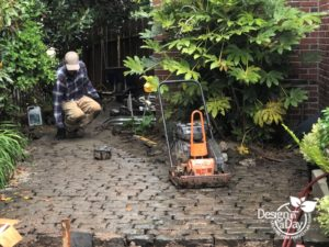 Portland installation of patio pavers with existing Fatsia japonica -Japanese Aralia landscape.
