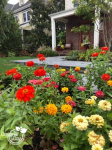 Portland residential design includes colorful zinnias.