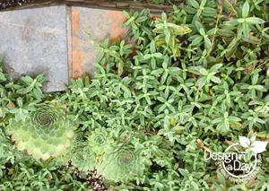 Hendrickson plant tex