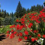 Portland gardening for birds