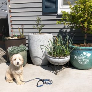 Portland Oregon residential landscape modern design with clients puppy.