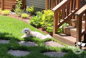 NE Portland backyard gets dog friendly landscape update.