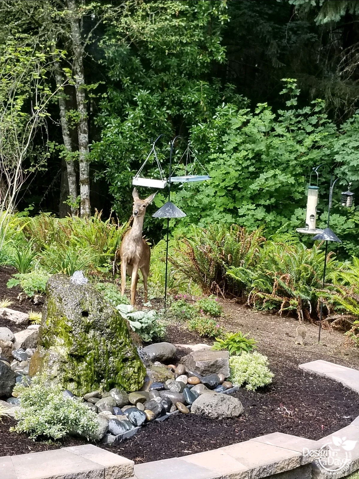 This Portland garden attracts wildlife with bird food and water.