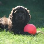 Carol's Mercer Island clients puppy Remington Johnson habits were part of landscaping for dogs.