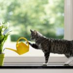Cat watering plant