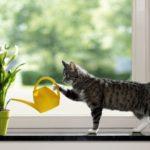 Cat watering plant