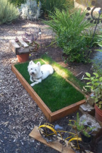 Uchytil dog laying in planting box