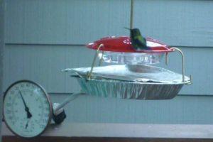 Hummingbird feeder in winter