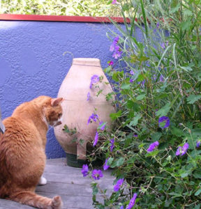 NW Portland roof garden with cat Cracker Jack