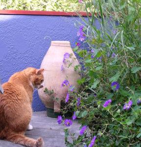 N. W. Portland roof modern garden with cat Cracker Jack