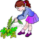 weed-clipart-A_Little_Girl_Pulling_Weeds_Royalty_Free_Clipart_Picture_081111-152171-530047