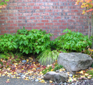 Rain garden clears away winter water from entry patio with low maintenance plantings.