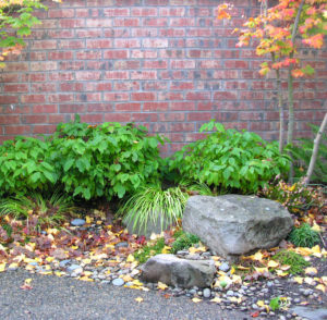 Rain Gardens are not just a ring of drainrock!!!  Courtyard entries are the norm in Charbonneau, a planned community in Wilsonville, Oregon.