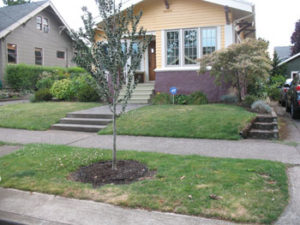 Classic NE Portland bungalow in Rose City Park neighborhood needs thoughtful no lawn landscape plan.