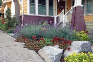 Rock garden plants Rose City Park neighborhood of Portland, Oregon