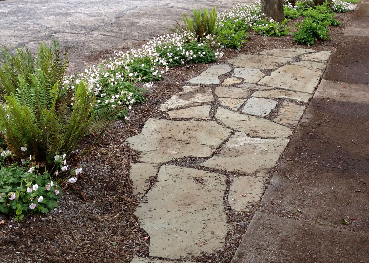 Plantings For Parking Strips Landscape Design In A Day