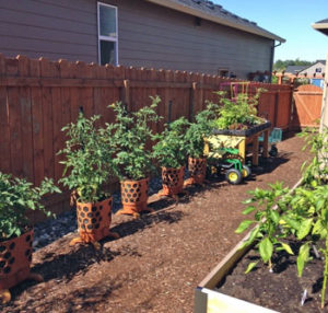 Side yard transformed to easy access edibles garden