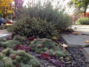 Details of walkway plantings