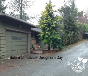 overgrown entry landscape in west hills neighborhood of Portland, Oregon
