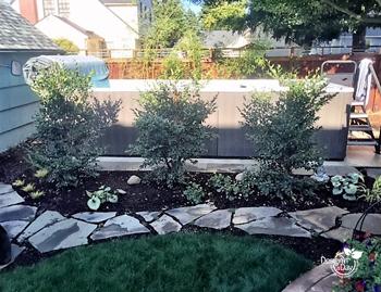 Low maintenance screening plants for swim spa backyard.