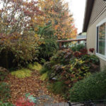 Portland Landscape Design East Moreland Fall photo