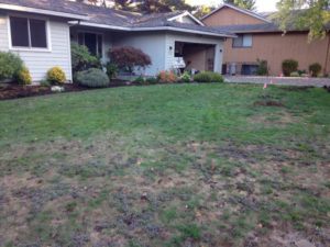Uplands Neighborhood of Lake Oswego before drought tolerant lawn.