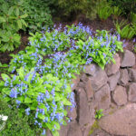 hillside garden design in Portland Oregon