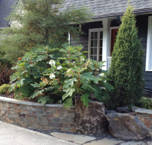Hendrickson planter uses hardscape to create privacy.