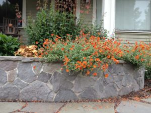 Mickelsen planter uses hardscape to increase the curb appeal.
