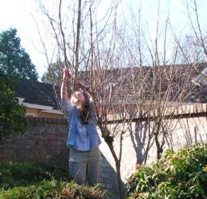 Carol on a garden coach appointment pruning for winter care.