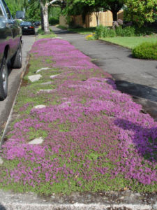North Portland Landscape Design parking strip