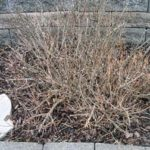 Dead plant water blog