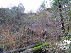 Coastal feeder slope