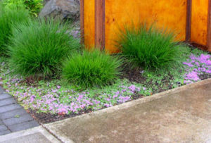Low maintenance xeriscape landscape design with good grasses.