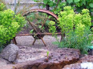 Euphorbia Humpty Dumpty with wagon wheel