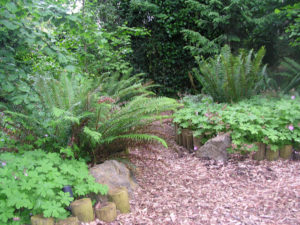 Hardy geranium and sword fern are two of my favorite dog friendly landscape plants for Portland Oregon.