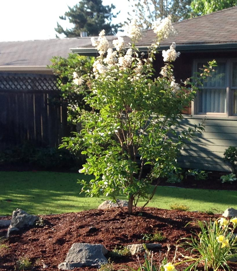 Landscape Design In A Day: Small Trees For Portland Dog Friendly Landscaping