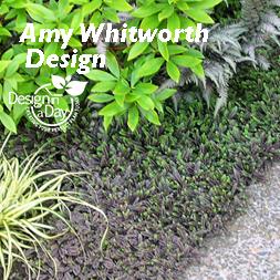 Portland Garden Design Groundcover