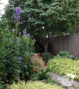 Portland Landscape Designer uses Purple Monkshood in Eastmoreland Garden