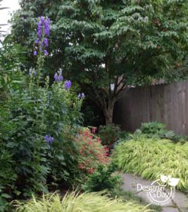 Portland Landscape Designer uses Purple Monkshood in Eastmoreland Garden