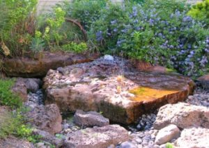 Dog friendly water feature in garden Landscape Design in a Day Portland Oregon