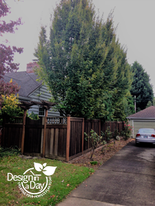 Affordable Landscaping Portland residential trees.