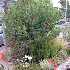 Portland Residential Landscape Designer