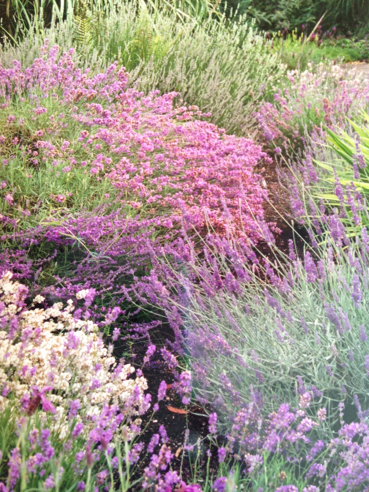 Winter Flowers Feed Bees - Landscape Design In A Day